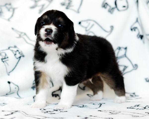 Puppy jessy Rocky