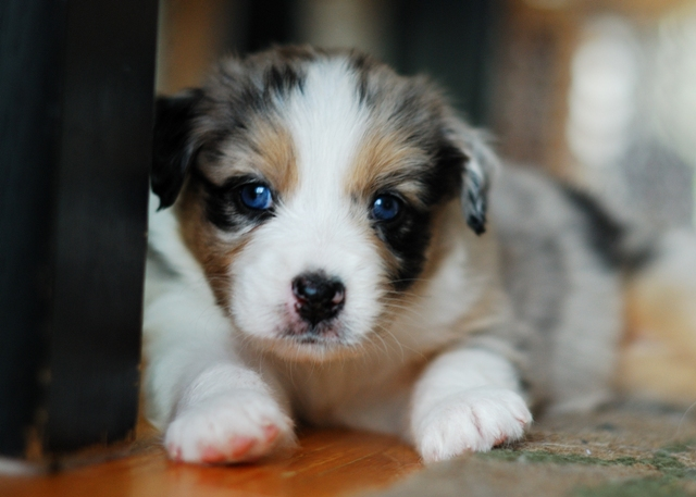 Puppy jessy Zumba