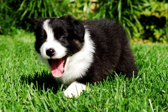 Puppy jessy Crash