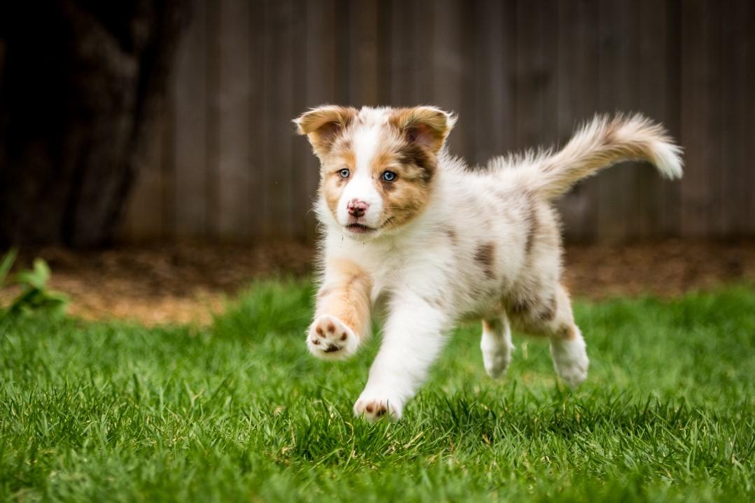 Sunny puppy 2021 8w