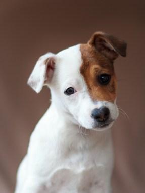 moi-du-toi-photography-dog-portraits-1445