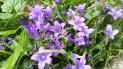 fleurs 18