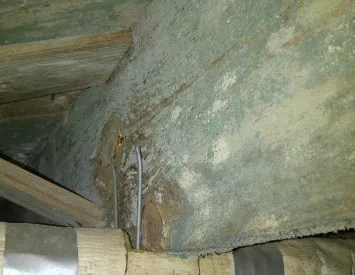 Crawl Space Mold  Fungi Removal