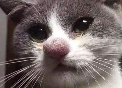"""Инструкция по применению Дексаметазона кошкам. """"Дексаметазон"""" для кошек: инструкция по применению и отзывы"""