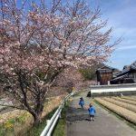 4月の冷え込みと桜の開花と。。