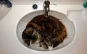 Co jest ważniejsze w śnie - długość czy jakość - Cat sleeping - Ian Barbour - Flickr