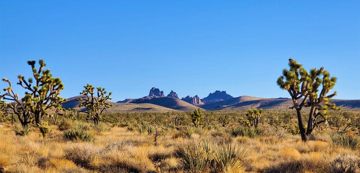 Welcome to the Mojav3 Desert