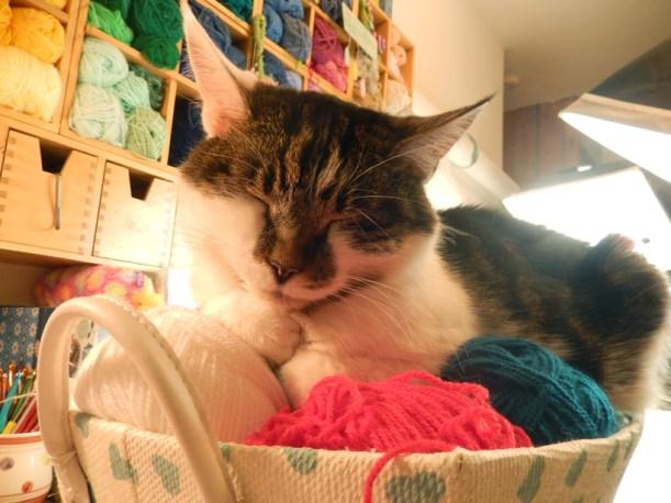 minnie-on-the-wool