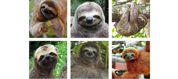 sloth-gallery-2