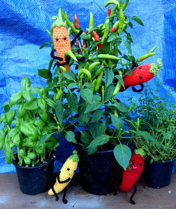 Chilli-plants