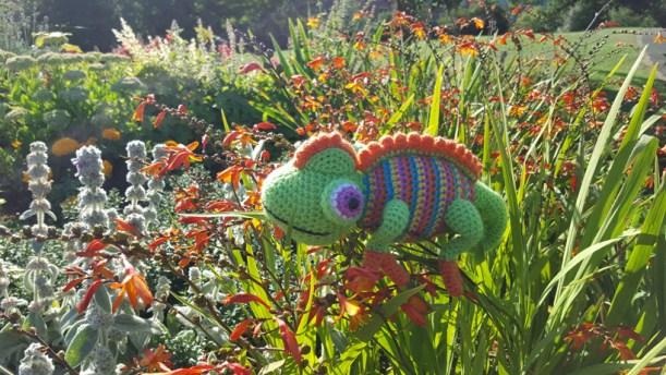 orange-chameleon