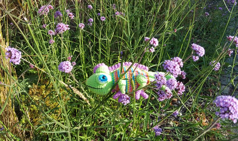 purple-chameleon