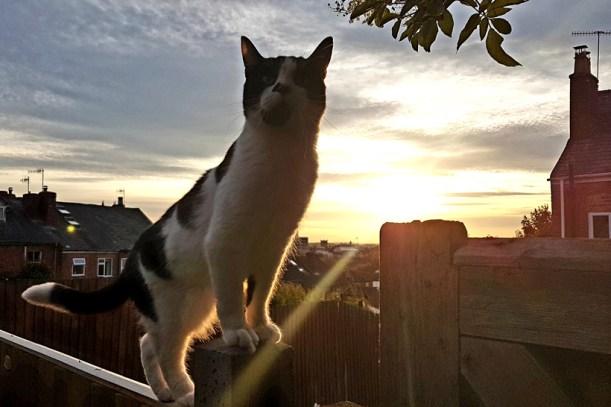 mojo-sunset