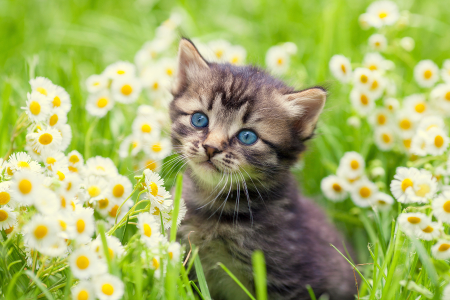 Cute Wallpapers Of Kittens And Puppies 21 Cute Kittens Playing Around Flowers Will Make Your Day