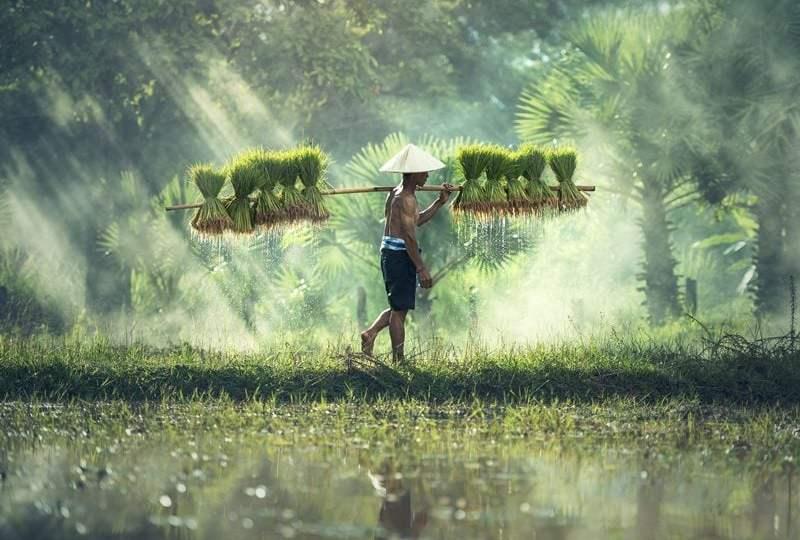 dana desa dan petani