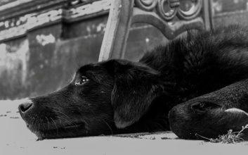 anjing masuk masjid
