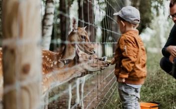 Sisi Pilu Berkunjung ke Kebun Binatang