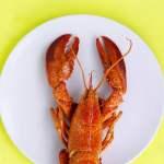 Saya Pelaku Bisnis Seafood Export, dan Ide Ekspor Benih Lobster Itu Aneh!