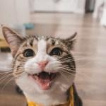 Pengalaman Merayu Orang Tua Biar Boleh Pelihara Kucing di Rumah