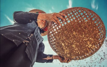 cara petani bantul membawa gabah kronjot Starter Pack Wajib Perempuan Saat Lockdown dengan Kearifan Lokal aka Menjemur Padi