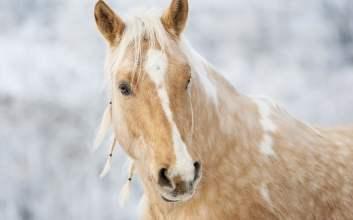 cerita horor bertemu siluman manusia berkepala kuda mojok.co