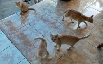 dilema memelihara kucing kampung liar kasihan tapi ngeselin mojok.co