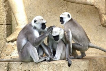 Mojok dan Para Monyet