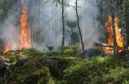 Bencana Asap di Batok Kepala Para Pejabat NKRI