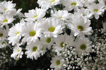 Dilarang Meniduri Bunga-Bunga