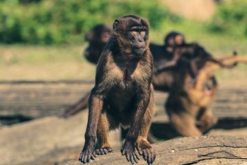 Nikita Mirzani di Antara Media dan Para Monyet