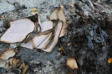 Tentang Bakar-bakar Buku: Curhat Seorang Mamah Muda