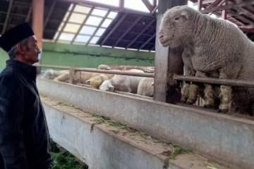 Muhammad Faizin bersama Dombat peliharaannya. Foto oleh Hamma Izzudin:Mojok.co