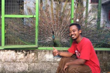 Anggit dan burung merak hijau kesayangannya