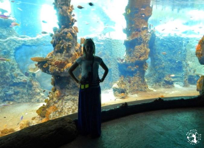 Mój Punkt Widzenia Blog - wielkie akwaria ze zwierzętami wodnymi, Afrykarium