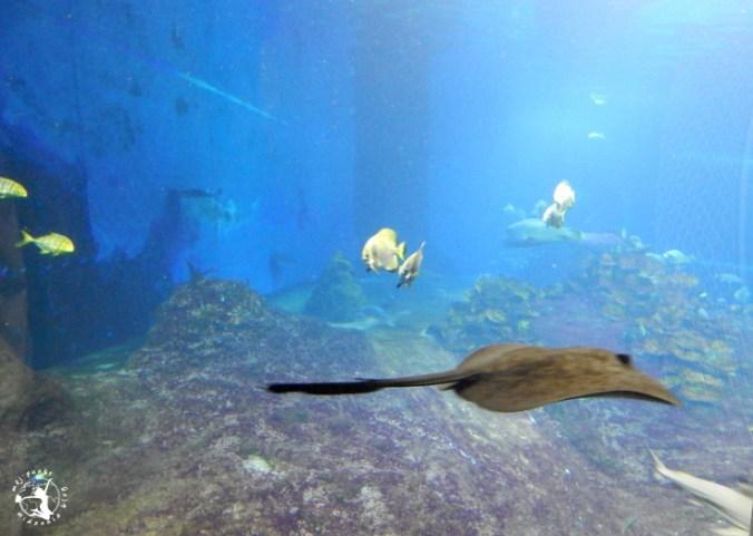 Mój Punkt Widzenia Blog - płaszczki, rekiny i ryby w Afrykarium
