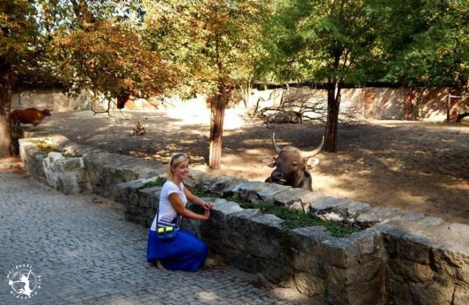 Mój Punkt Widzenia Blog - wrocławskie ZOO