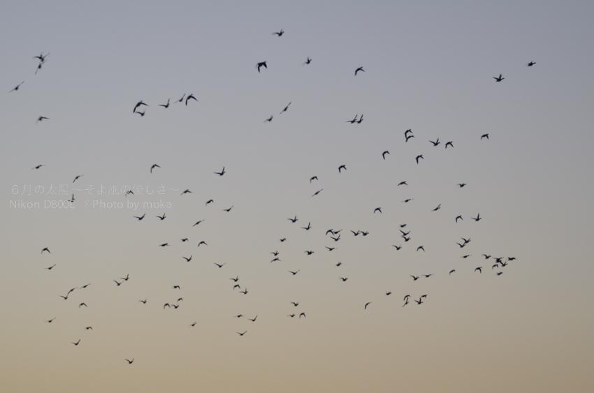 [6]大空を羽ばたく鳥のように!!