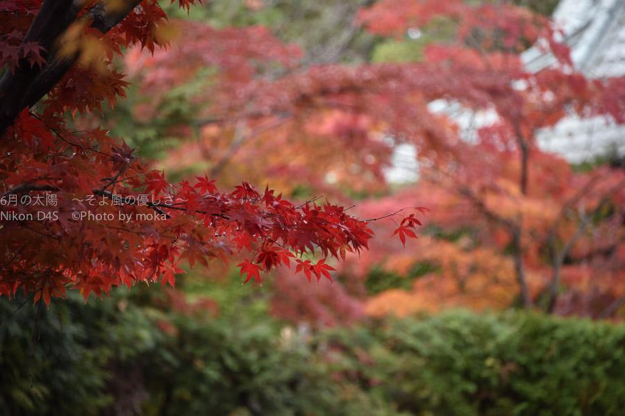 20141130_hondoji018