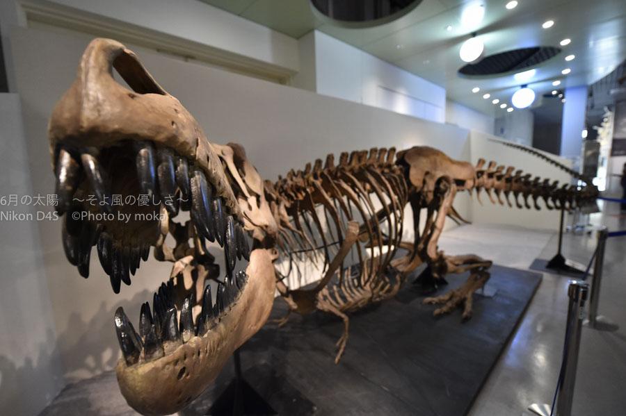 [6]夏休みに恐竜を研究しよう!!