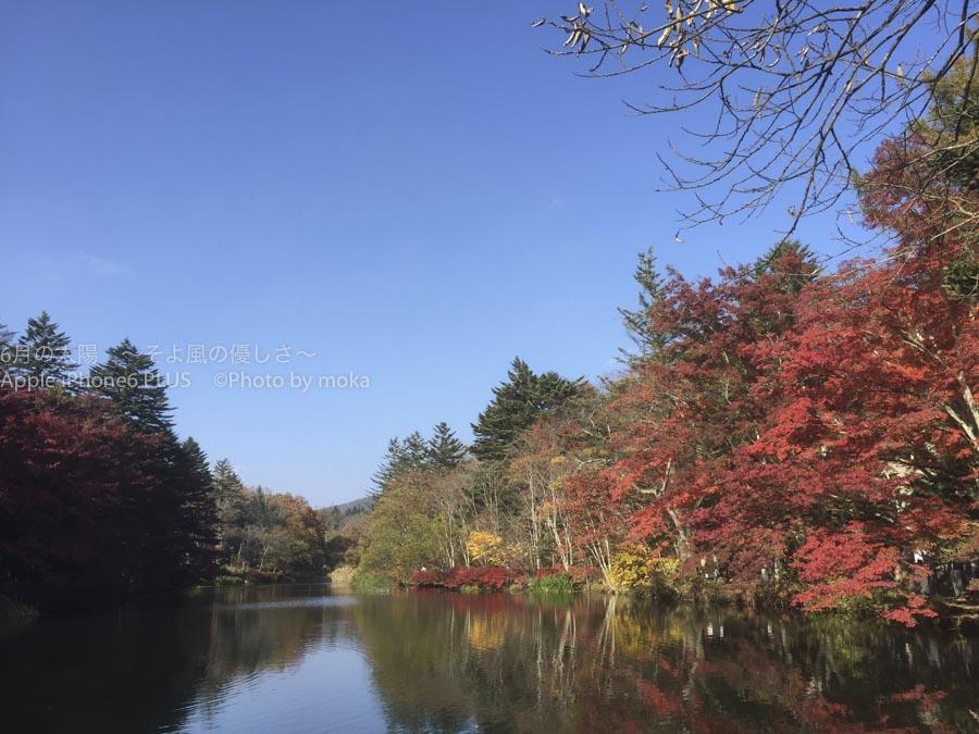 [6]軽井沢で楽しむ雲場池の紅葉