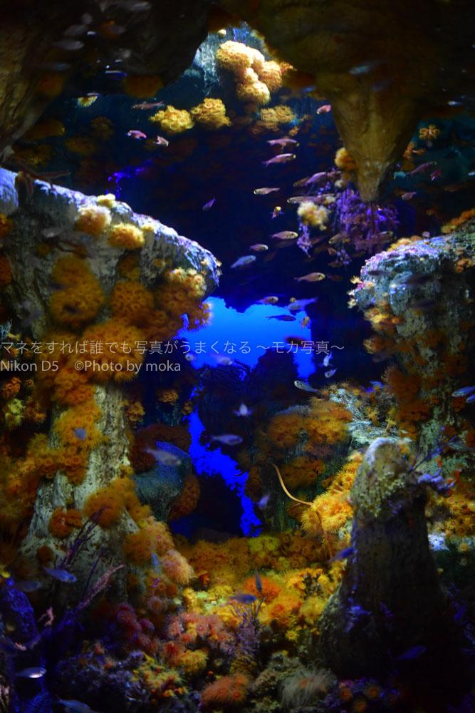 [6]サンシャイン水族館の洞窟に咲く花