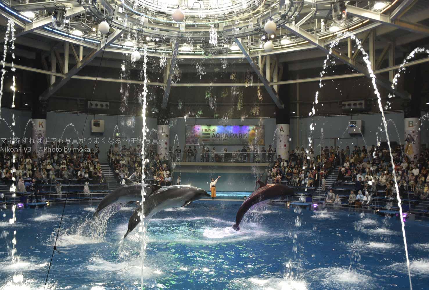 [6]東京の水族館でイルカショーを写真に撮ろう!