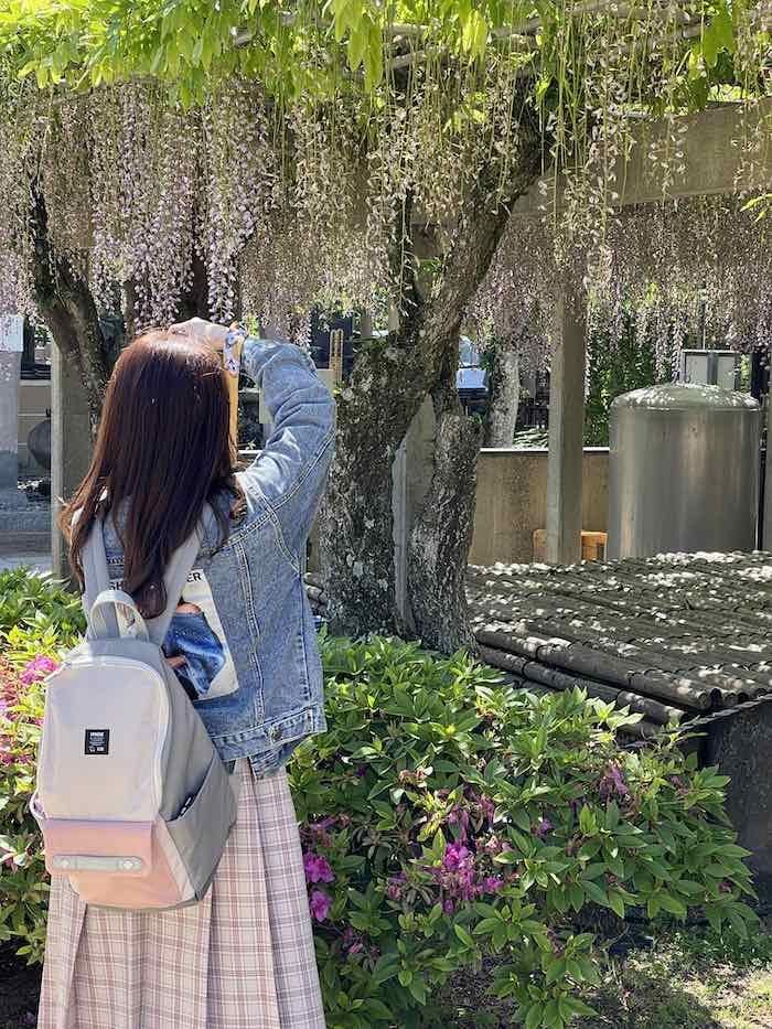 【iPhone写真】藤の花とカメラ女子