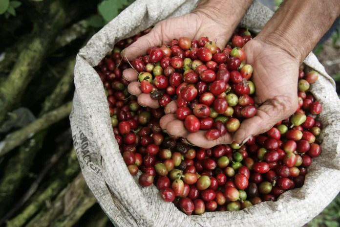 Kolombiya-kahve-002