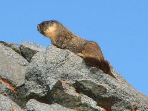 Things That Bite - Ground Squirrel