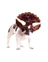 Dog costumes - Cavalier King Charles Spaniel Blog - Mokido