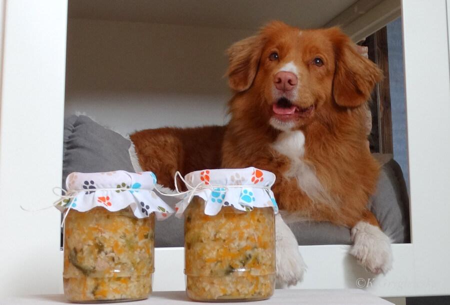 psie sloiki dieta dla psa