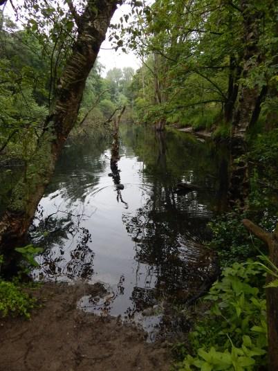 nationaal_park_zuid-kennemerland-DSCN7307