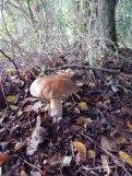 paddenstoel-DSCN7554