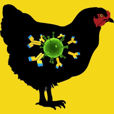 Anti Chicken Plasminogen IgG